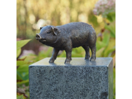 Beeld brons Varken - Bronzartes