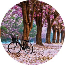 80 diameter - Glasschilderij - rond schilderij fotokunst - Cherry blossom - foto print op glas