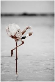 Canvas met lijst - flamingo - 50x70 cm