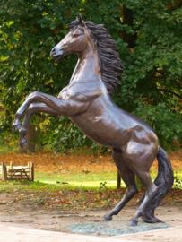 Tuinbeeld - groot bronzen beeld -  steigerend paard - Bronzartes