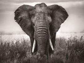 60 x 110 cm - Glasschilderij - schilderij - olifant - foto print op glas