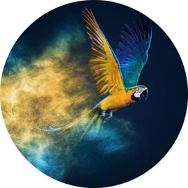 rond 100 cm - Glasschilderij papegaai - rond schilderij fotokunst dieren - Papegaai - foto print op glas