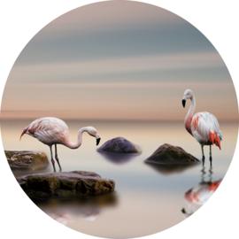 rond 80 cm - Glasschilderij flamingo - rond schilderij fotokunst dieren - Flamingo's - foto print op glas