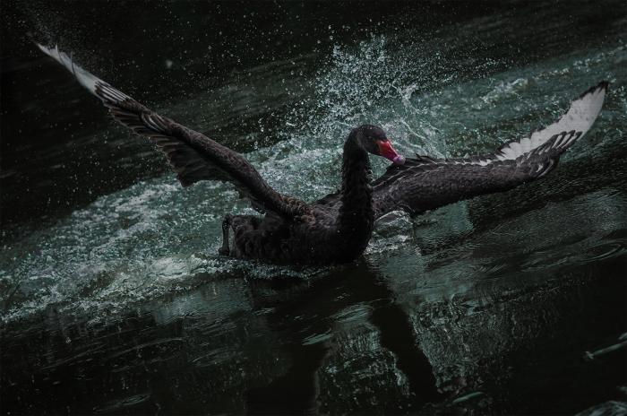 Schilderij Dibond - Vogel