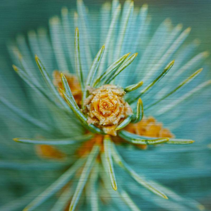 Schilderij Dibond - plant