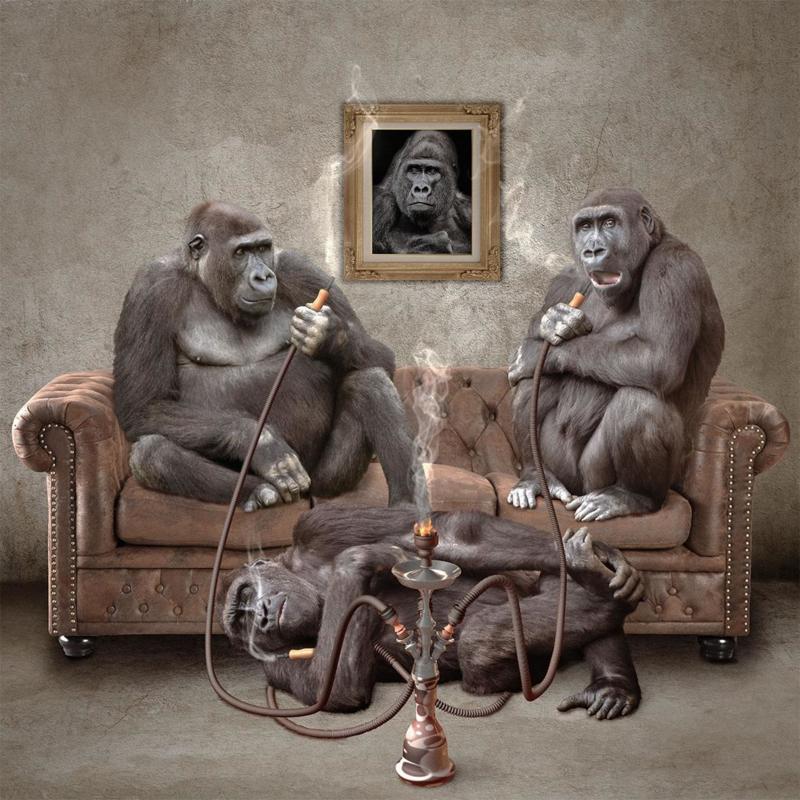 Schilderij Dibond - Gorilla's