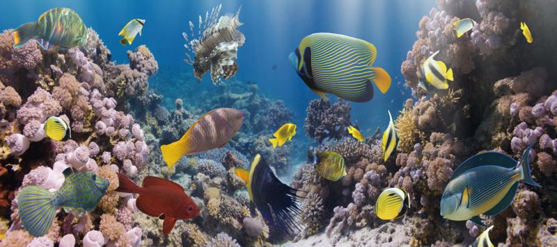 160 x 60 cm - Glasschilderij - schilderij fotokunst  - Oceaan Vissen Koraal - foto print op glas
