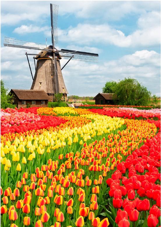 80 x 120 cm - Plexiglas schilderij - Tulpenveld - fotokunst bloemen afbeelding op acryl