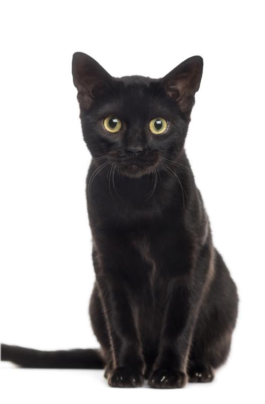 80 x 120 cm - Plexiglas schilderij dieren - Zwarte Kat - fotokunst afbeelding op acryl