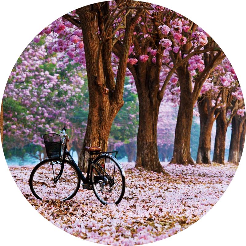 80 cm rond - Glasschilderij - rond schilderij fotokunst - Cherry blossom - natruur foto print op glas
