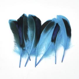 50 stuks veren blauw/zwart 11 tot 16cm