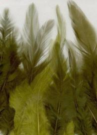 CE12235/3506- 15 stuks hanen verenmix van 9-15cm lang groen tinten