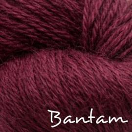 Titus - kleur 004 Bantam