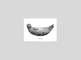 Postkaart zeehond - Ferdy Remijn