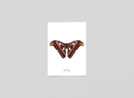 Postkaart Nachtvlinder - Ferdy Remijn