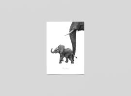 Postkaart Afrikaans baby Olifantje - Ferdy Remijn