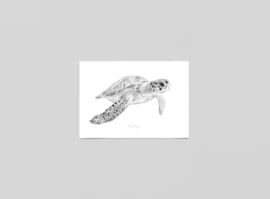 Postkaart Zeeschildpad - Ferdy Remijn