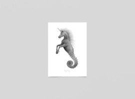 Postkaart Seahorn - Ferdy Remijn