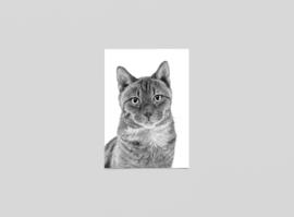 Postkaart Pooky, Britse kort haar - Ferdy Remijn