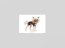 Postkaart Chinese naakt hond - Ferdy Remijn