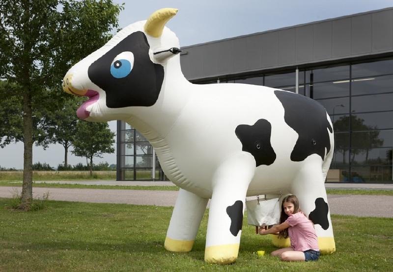 Ranja koe