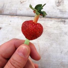 Kroontjes van aardbeien verwijderen