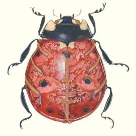 Kaart Lieveheersbeestje