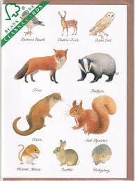 Kaart CC216 Wildlife
