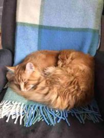 Smaug & Sharon gecharmeerd van Tweedmill