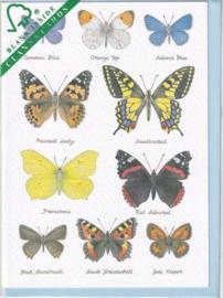 Kaart CC224 Butterflies