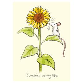 M320 Sunshine of my Life