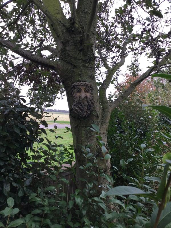 Treebeard vindt boom