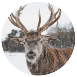 Muurcirkel reindeer 30 cm.