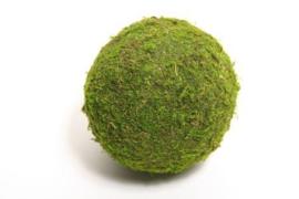 Bal Asia Moss D15 cm