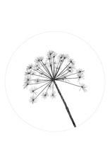Muurcirkel/tuincirkel berenklauw
