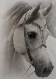 Deco bordje paard