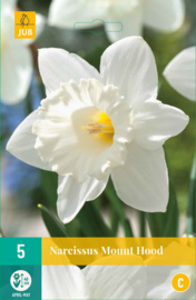 Narcissus trompet 'Mount Hood'