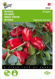 Snackpaprika pot 'Paragon', Capsicum annuum