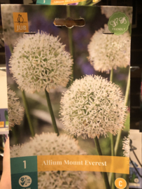 Allium 'Mount Everest' - XL bol