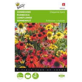 Echinacea X 'Cheyenne Spirit', Zonnehoed of Rudbeckia