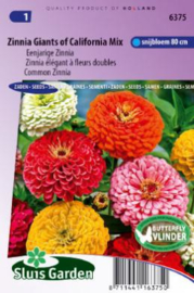 Zinnia elegans 'Giants of California Mix', Zinnia