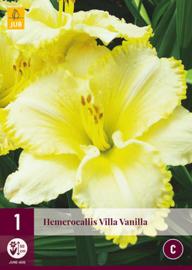 Hemerocallis 'Villa Vanilla', Daglelie