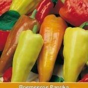 Paprika 'Roemeense Amy', Capsicum annuum