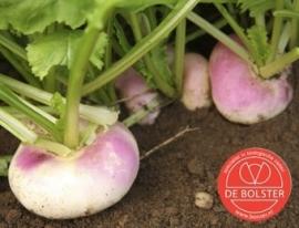 Meiraap 'Milanese Witte Roodkop', Brassica rapa var. majalis Biologisch