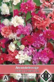 Clarkia unguicula 'Excellent Mix', Sierlijke Clarkia of Amandelroosje