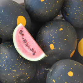 Watermeloen 'Moon And Stars', Citrullus lanatus