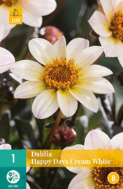 Dahlia border enkelbloemig 'Happy Days Cream White' 30 cm