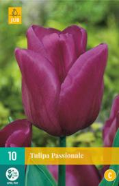 Tulipa triumph 'Passionale'