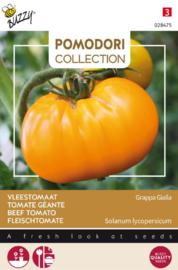 Tomaat vleestomaat 'Grappa Gialla', Solanum lycopersicum
