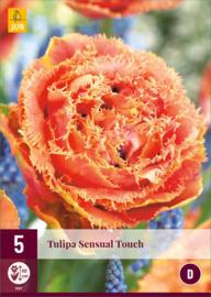 Tulipa dubbel gefranjerd 'Sensual Touch'